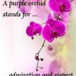 Best Orchids Quotes 2 image